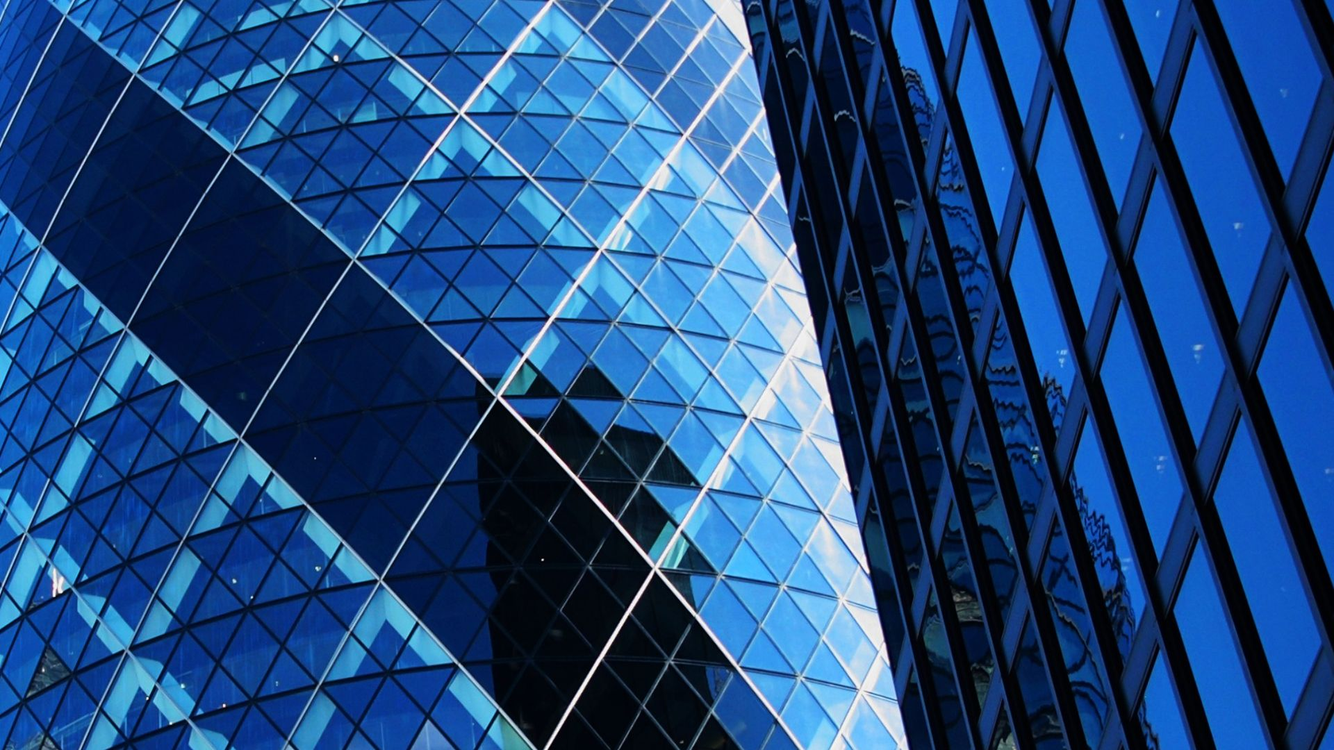 Gherkin close up